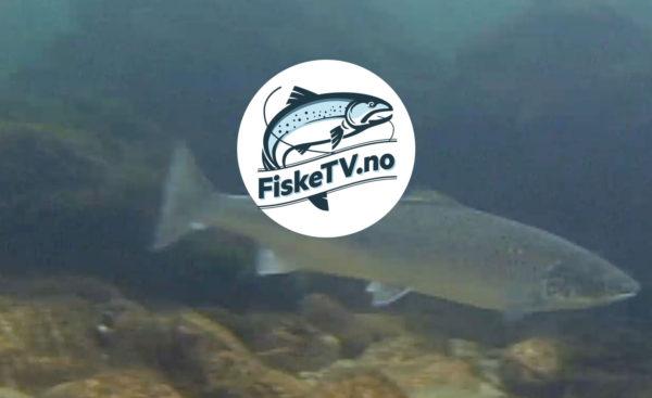 FiskeTV