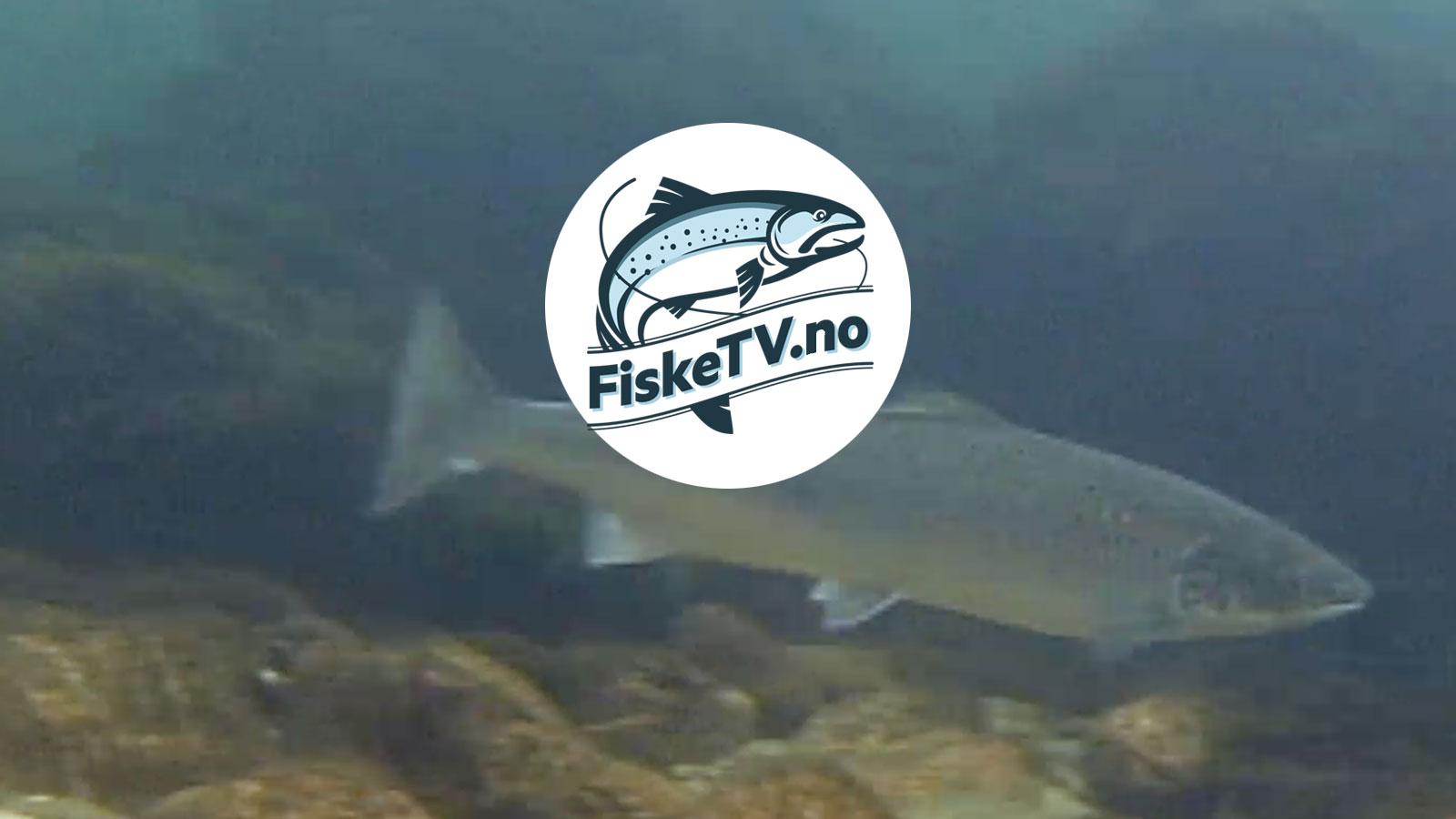 fisketv_strandlund